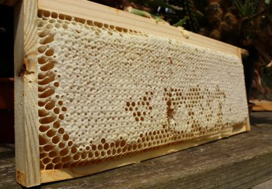 The Apiary in August