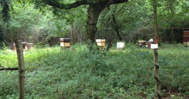 The Apiary in September