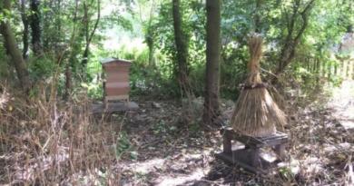 Mary's Bees