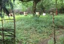 The Apiary in October