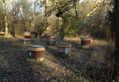 The Apiary in January