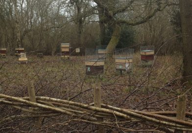 The Apiary in February