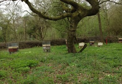The Apiary in April