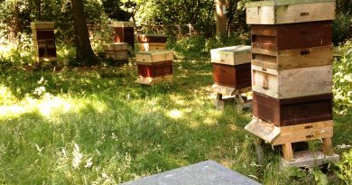 The Apiary in June
