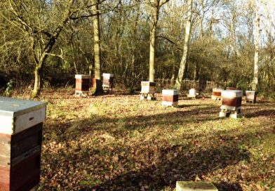 The Apiary in December