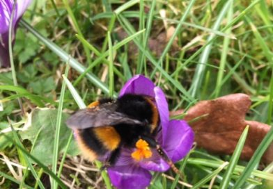 The Apiary in March