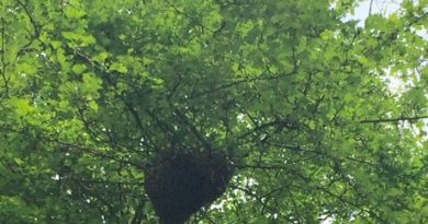 The Apiary in May